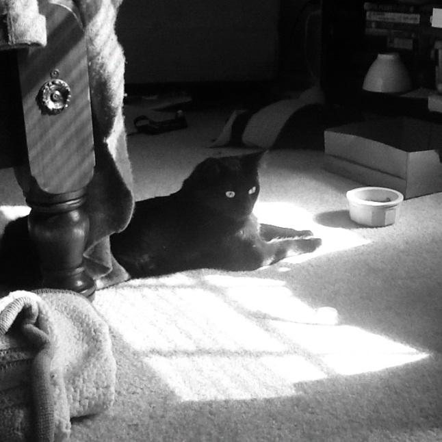 My Artsy Cat, Winston