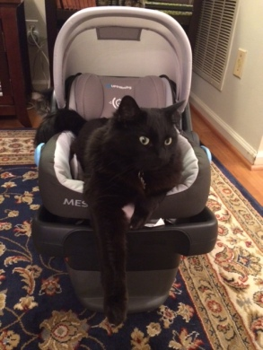 Winston taking the car seat for a test run